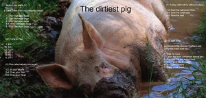 The dirtiest pig